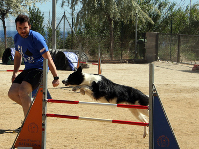 201405 Badalona Open Collie